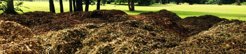 s and S Brush Pile and tree Removal