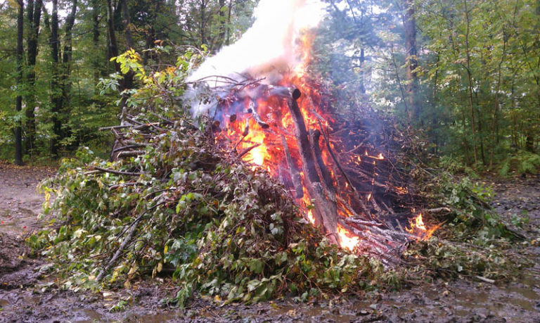 Tree and Brush removal in Southern, NH